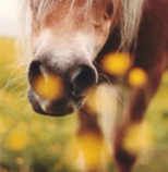 horse in a field with flowers,