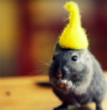 leave your comfort zone, cute rat eating a sunflower seed with yellow elf cap